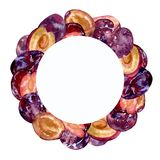Watercolor round frame with whole and cut fruits plums on a white background for creative design. Watercolor round frame with whole and cut fruits plums on a Royalty Free Stock Images