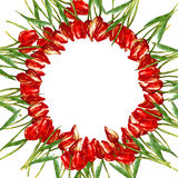 WATERCOLOR round wreath border frame WITH tulips Stock Photos
