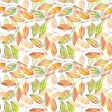 Watercolor rowan ashberry leaf branch botanical seamless pattern Royalty Free Stock Photo