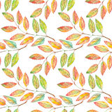 Watercolor rowan ashberry leaf branch botanical seamless pattern Royalty Free Stock Image