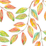 Watercolor rowan ashberry leaf branch botanical seamless pattern Royalty Free Stock Photos