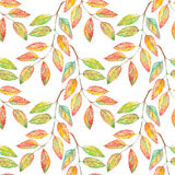 Watercolor rowan ashberry leaf branch botanical seamless pattern Stock Photography
