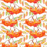 Watercolor rowan ashberry leaf branch seamless pattern.  Stock Photo