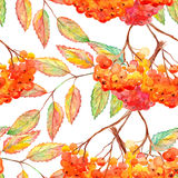 Watercolor rowan ashberry leaf branch seamless pattern.  Royalty Free Stock Image