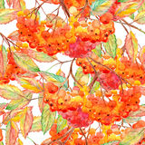Watercolor rowan ashberry leaf branch seamless pattern.  Stock Image