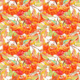 Watercolor rowan ashberry leaf branch seamless pattern.  Stock Photos
