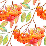 Watercolor rowan ashberry leaf branch seamless pattern.  Royalty Free Stock Photography