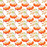 Watercolor rowan ashberry leaf branch seamless pattern Royalty Free Stock Image