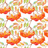 Watercolor rowan ashberry leaf branch seamless pattern Stock Images