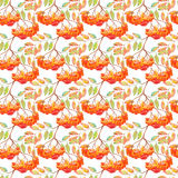 Watercolor rowan ashberry leaf branch seamless pattern Stock Photos