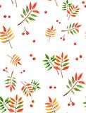 Watercolor rowan background. Seamless pattern with berries and leaves Stock Illustration
