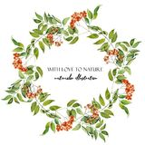 Watercolor rowan branches wreath, frame border royalty free illustration