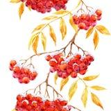 Watercolor rowan pattern Stock Photo