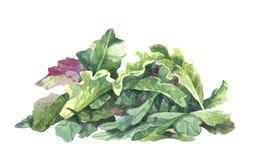 Watercolor rucola salad Stock Photo