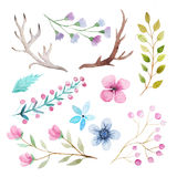 Watercolor rustic set of flowers and leaves Royalty Free Stock Photo