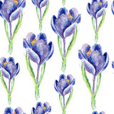 Watercolor Saffron Herb. Seamless Pattern Stock Images