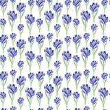 Watercolor saffron herb. seamless pattern royalty free illustration