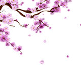 Watercolor sakura background with blossom cherry tree branch. Ha Stock Photography