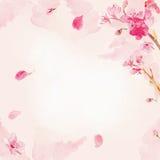 Watercolor sakura flower background. Cherry flower background Stock Image