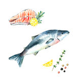 Watercolor salmon. Stock Images
