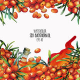 Watercolor sea buckthorn card Royalty Free Stock Images