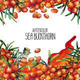 Watercolor sea buckthorn card Stock Images