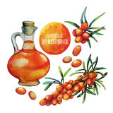 Watercolor sea buckthorn oil jar and berries Stock Photography
