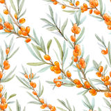 Watercolor sea buckthorn pattern Stock Photography