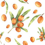 Watercolor sea buckthorn seamless pattern. Botanical floral ornament with seaberry and leaves isolated on white Stock Photography