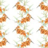 Watercolor sea buckthorn Royalty Free Stock Image