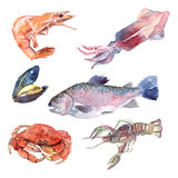 Watercolor Sea Food Set Royalty Free Stock Photography