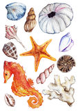 Watercolor sea ocean seahorse seashell coral ammonit urchin set.  Royalty Free Stock Image