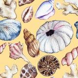 Watercolor sea ocean seashell clam coral ammonit urchin seamless pattern Stock Photos