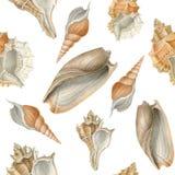 Watercolor sea shells seamless pattern Stock Image
