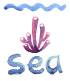 Watercolor sea sponge Royalty Free Stock Images