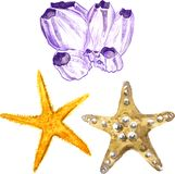 Watercolor sea stars and coral Stock Images