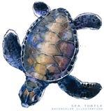 Watercolor sea turtle illustration. Marine animal stock illustration
