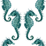 Watercolor seahorse pattern Royalty Free Stock Photography