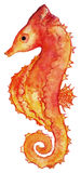 Watercolor seahorse red yellow orange isolated clip art vector.  Royalty Free Stock Photo