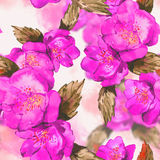 Watercolor seamless background  with rose Royalty Free Stock Photography