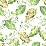 Watercolor seamless botanical pattern. Leaves, twigs, grass. Nat. Ural background stock illustration