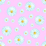 Watercolor seamless camomile flower pattern. On the light pink background for any project Royalty Free Stock Images
