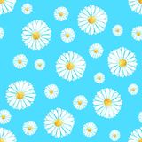 Watercolor seamless camomile flower pattern. On the light blue background for any project Stock Image