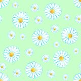 Watercolor seamless camomile flower pattern. On the light green background Royalty Free Stock Photography