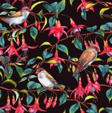 Watercolor seamless floral pattern. Hand-drawn watercolor seamless floral pattern with colorful pink fuchsia branches and finches birds. Tropical exotic flowers Royalty Free Illustration