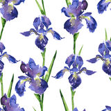 Watercolor seamless floral pattern Royalty Free Stock Photos