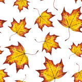 Watercolor seamless pattern autumn leaves of maple. Watercolor seamless pattern autumn leaves maple, hand painted watercolour autumn background of falling leaf Royalty Free Stock Photos