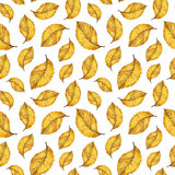 Watercolor seamless pattern of autumn yellow leaves. Watercolor seamless pattern autumn yellow leaves of elm, hand paint watercolour autumn background of falling Royalty Free Stock Images