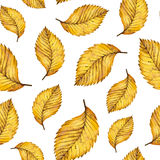 Watercolor seamless pattern autumn yellow leaves of elm. Hand painted watercolour autumn background of falling leaf, design for fabric, textile, wrapping paper Stock Photography