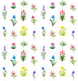 Watercolor seamless pattern with blooming field flowers. Watercolor lawn of herbs and wildflowers. Floral collection Stock Photos